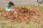 raking leaves maggie 4